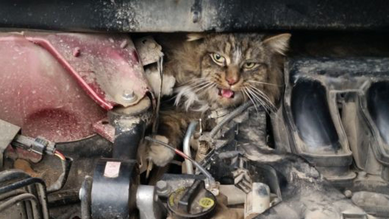 How To Get Cat Stuck In Engine