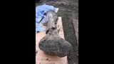 Photos: Mammoth bones discovered during construction at Reser Stadium