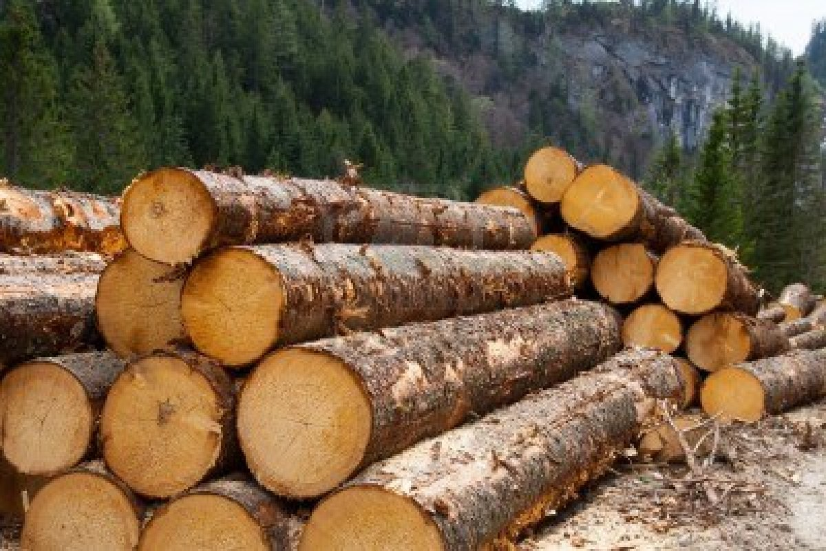 Group claims to have sabotaged oregon lumber mill 39 s logs for Mill log
