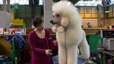 Photos: 2016 Crufts dog show in England