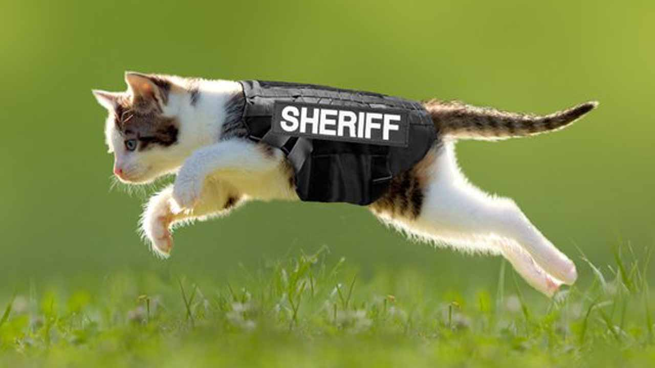 April Fool's Feline Patrol Joke